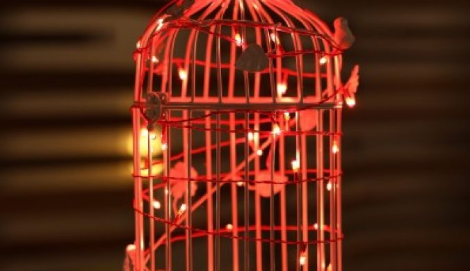 Home Delight 157 inch Red Rice Lights(Pack of 10) 7